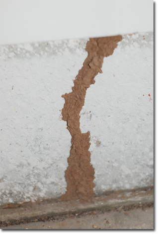 Termites Damage Evidence, How do I know if I have termites